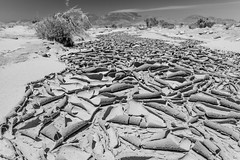 Desert Stream (Mark Harshbarger Photography) Tags: california statepark bw texture desert mud dry riverbed anzaborrego cracks