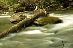 2016_0520Porter-Brook0005 (maineman152 (Lou)) Tags: nature landscape spring stream maine may brook naturephotography landscapephotography flowingwater naturephoto landscapephoto millbrookwaterflowing