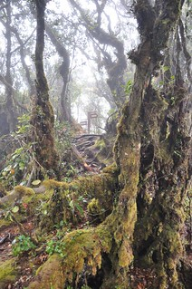 cameron highlands- malaisie 24