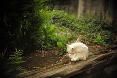 cat (Typ250) Tags: leica cat jp  schneiderkreuznach  m240 leicam  typ240 xenonf2f5cm