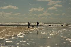 Belgian coast (Natali Antonovich) Tags: sea portrait dog reflection water animal silhouette walking seaside couple pair horizon together northsea tradition relaxation oostende seashore seasideresort belgiancoast seaboard heandshe