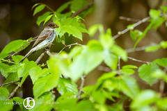 Dinner Time (JohnBorsaPhoto) Tags: life camping trees wild camp tree bird nature leaves yellow birdie mouth bug mom outdoors fly flying spring waiting branch sitting wasp nest feeding wildlife branches feathers mother mama bee jacket sit perch wait perched hornet feed bumble birdy