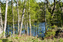 4Y1A7942 (Ninara) Tags: sea summer nature finland island pond helsinki kes vallisaari historiakohde sotilassaari