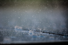 DSC_1061 (This_is_Marin) Tags: raindropphotography raindrop photography waterdrop waterdropphotography outdoor