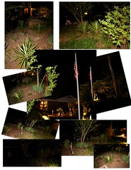 Yucca Night (jalexartis) Tags: lighting nightphotography night yard dark landscape lights backyard landscaping shrub yucca shrubbery yuccaplant