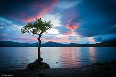 The Tree (David Hannah) Tags: sunset tree scotland loch lomond