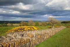 Hadrian's wall (Unesco world heritage) near Walwick (Frans.Sellies) Tags: england wall ginster genista img7490 ph598 heidebrem