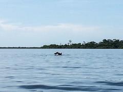 "Bahia de los Dolfines <a style=""margin-left:10px; font-size:0.8em;"" href=""http://www.flickr.com/photos/127723101@N04/27263125271/"" target=""_blank"">@flickr</a>"