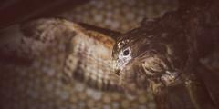 Ant Cabin (PonyHans / Castor) Tags: old house abandoned animals forest 35mm 1 skne woods nest eagle sweden hawk ant voigtlander 14 4 insects f ants sverige 35 voigtlnder nesting antnest hk rn myror uppstoppad taxadermia