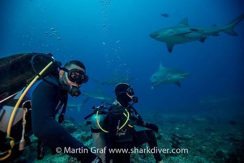 Flickriver: Photos from sharkoperator