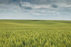 Tuscany (Jan Malkovsky) Tags: sky italy canon czech farm harvest crop tuscany fields agriculture rollinghills farmfields canon70d czechtuscany cesketoscansko skyofglory