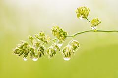 Water droplets (lee adcock) Tags: nature naturereserve pottericcarr yorkshirewildlifetrust nikon105 nikond7200