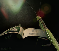 GrasshopperPieCookbook (clabudak) Tags: composite insect recipe book surreal fantasy prayingmantis grasshoppers
