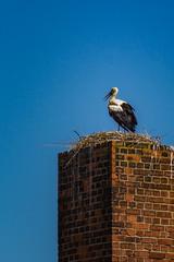 Adebars Nest (fuechsel.michel) Tags: raw nest shooting schornstein storch adebar landhandel roschwitz