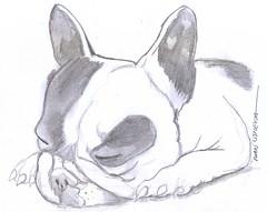 perro a lpiz (ivanutrera) Tags: dog animal pencil sketch drawing sketching canino draw dibujo ilustracion lpiz dibujoalpiz