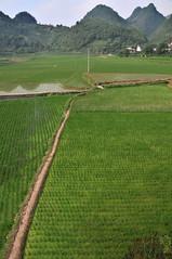 Reisfelder Zentralchina