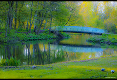 Bridging the nature~Explored 03052012 (Prasanna Gururajan) Tags: bridge trees plants plant holland reflection tree green nature water glass grass amsterdam yellow garden canal spring branch natural lush pegion greenary mygearandme mygearandmepremium etherlans