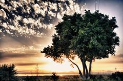 104/366 - Con estas vistas... (Jairo Galbis ) Tags: sunset sky espaa naturaleza nature landscape atardecer spain paisaje salinas alicante cielo hdr 2012 saltworks torrevieja nikond90 flickraward5 mygearandme jairogalbis nikkor18105mmf3556gedafsvrdx 366momentos