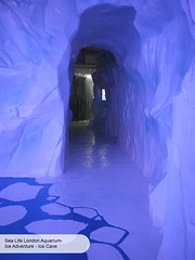 London Aquarium Ice Adventure Ice Cave reverse (ravenhill design) Tags: design immersive interactive bas londonaquarium happycampers spidercrab ravenhill researchstation gentoopenguins britishantarcticsurvey iceadventure crawlthrough ravenhilldesign