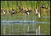 Jail Break (Explore May 13, 2012) (WanaM3) Tags: nature water duck bravo texas teal wildlife explore bayou pasadena splash bluewingedteal avianexcellence flickrdiamond horsepenbayou wanam3 exploremay132012