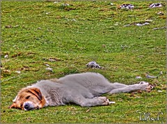 Dog´s life/ Vida de perros (El Saskuas) Tags: photoshop photography hdr zamora luminance mondariz artizen saskuas