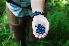 summer delight (.:: Maya ::.) Tags: wild mountain man male woods hand fresh blueberry rila picked  mayaeye mayakarkalicheva