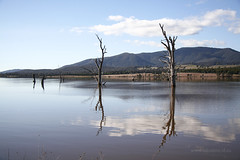 Lake Nillahcootie (Adam Dimech) Tags: reflection tree water rural dead countryside lima dam country australia victoria reservoir eucalypt eucalyptus gumtree irrigation waterway barjarg nillahcootie limasouth lakenillahcootie goulburnmurrayruralwatercorporation