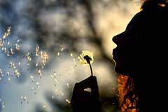 wishes in the wind (~mimo~) Tags: light sunset woman tree silhouette denmark photography golden bokeh dandelion cliche makeawish hcs mern mimokhair