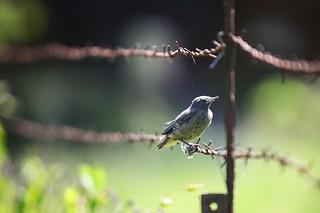 Chimney Bird