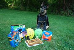 DSC_6276 (aerofan245) Tags: birthday dog 3 dark shepherd sage german batman knight batdog gsd