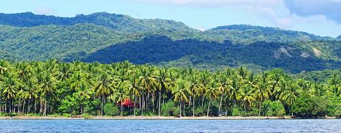 Coconut Trees - Moyo Island