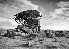 Moods Of The Moor (RTA Photography) Tags: summer white black tree green contrast early nikon rocks moody shadows group shades ring dartmoor tone fairplay excellence the greatphotographers thegalaxy rockpaper saddletor d5000 thebluegroup artofimages mygearandme mygearandmepremium mygearme mygearandmebronze mygearandmesilver mygearandmegold mygearandmeplatinum ringexcellence dblringexcellence thewhitegroup theredgroup galleryoffantasticshots theyellowgroup thegreengroup theblackgroup rememberthatmoment rememberthatmomentlevel4 rememberthatmomentlevel1 flickrsfinestimages1 flickrsfinestimages2 thelooklevel4 flickrsfinestimages3 flickrsfinestimageslevel1 rememberthatmomentlevel2 rememberthatmomentlevel3 thelooklevel1 thelooklevel3 thelooklevel5 thelooklevel2 rememberthatmomentlevel7 rememberthatmomentlevel9 rememberthatmomentlevel5 rememberthatmomentlevel6 rememberthatmomentlevel8 bestgalleryoffantasticshots triringexcellence rememberthatmomentlevel10