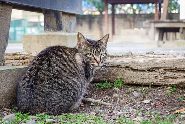 Today's Cat@2014-03-17