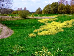 Yellow spots . (Franc Le Blanc .) Tags: trees nature lumix spring panasonic lente raps zeedijk koolzaad elshout