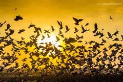 Marina Beach, Chennai (focalframes) Tags: beach landscape photography pigeons marinabeach chennai bayofbengal chennaiite focalframes