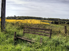 seat near Winchester, UK (neilalderney123) Tags: rural farm seat olympus winchester canola omd rapeseed 2016neilhoward
