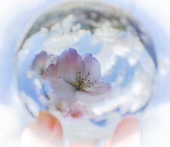 The World is just a bowl of cherry blossom!! (judy dean) Tags: blue sky clouds cherry blossom crystalball 2016 flowerspetals judydean sonya600