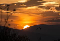 Golden Flight (d1g1dav3) Tags: trees ireland light sunset sun mountains bird clouds silver flying nikon country lucky wicklow lining avoca d5200