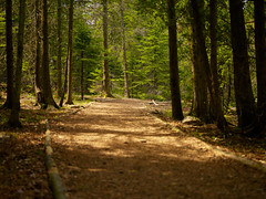 The lake trail (StephenCaissiePhoto) Tags: camping trees summer sunlight ontario rural warm hiking path trail shade deciduous curve tobermory shallowdepthoffield phaseone p30 captureone