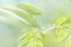 Multiple Nature 338 (pni) Tags: blur green suomi finland leaf helsinki dof multipleexposure helsingfors tripleexposure multiexposure seurasaari skrubu pni flisn pekkanikrus