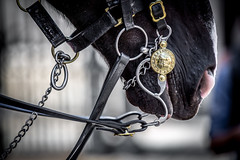 London, England - Bridle (Regan Gilder) Tags: uk greatbritain england horse london westminster animal canon outdoors nose gold unitedkingdom outdoor chain guards buckle straps chin whitehall horseguards bridle horseguardsparade horsebridle canoneos5dmarkiii changingofthehorseguards