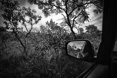Brazilian Savana Landscape Black & White Monochrome Nikon D600 (Marcelo TBR) Tags: brazilian savana landscape black white monochrome nikon d600