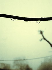 Dew Drops... (Farhan Ali RaNa) Tags: monochrome fog dewdrops waterdrop winters microphotography rurallife anewmorning mobilephotography