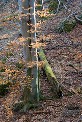 Vertical and Horizontal (Hejma (+/- 4500 faves and 1,5milion views)) Tags: park wood autumn tree leaves rocks branches national limestone gorge cramped ojcw