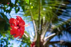 IMG_0131.jpg (Michele Stocco) Tags: hawaii gardenofeden 2016 mauiroadtohana