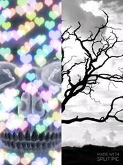 #deadtrees #skulls #art #artistic #artsy #beautiful #creative #creativity #daring #different #photography #photoedit #photomanipulation #digitalart (muchlove2016) Tags: art beautiful photomanipulation skulls creativity photography different artistic digitalart creative artsy photoedit daring deadtrees