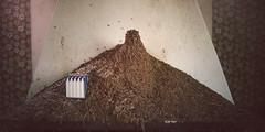 Ant Cabin (PonyHans / Castor) Tags: old house abandoned animals forest 35mm 1 skne woods nest sweden ant voigtlander 14 4 insects f ants sverige 35 voigtlnder nesting antnest myror