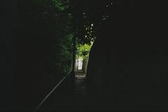 Lonely avenue (thomas.drezet) Tags: trip colour film lomo lomography space olympus ishootfilm negative 200 vista agfa 35   filmisnotdead