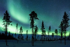 Auroral Light (Philip Eaglesfield) Tags: forest canon frozen sweden aurora scandinavia auroraborealis