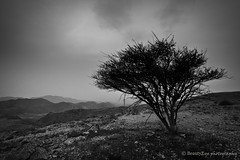 Muscat - Lonely Tree [B&W] (Beauty Eye) Tags: city longexposure nightphotography blackandwhite bw mountain seascape building tree green eye architecture night photoshop canon dark landscape eos rebel lights landscapes long exposure day nightshot cloudy outdoor scene adobe lonely bluehour om tamron oman muscat 2012 lightroom t3i mct  cameraraw ultrawideangle   f3545 600d   wadikabir  beautyeye masqat 1024mm  canon600d  tamronspaf1024mmf3545diiild rebelt3i kissx5 diiild canon600deos oman tamronspaf1024mmf3545d  muscat